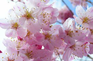 Rózsaszín virág
